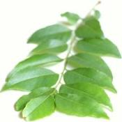 Curry Leaves
